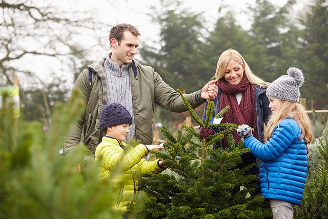 How to Pick the Best Christmas Tree